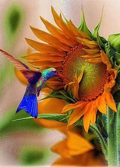 """Hummingbird On Sunflower Greeting Card for Sale by John  Kolenberg.  Our premium-stock greeting cards are 5"""" x 7"""" in size and can be personalized with a custom message on the inside of the card.  All cards are available for worldwide shipping and include a money-back guarantee."""