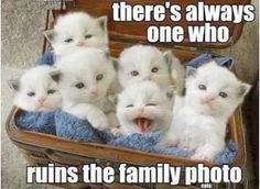 Incredible -> Funny Cat Pictures Birthday #super