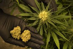 A 'light at the end of the tunnel' for long-awaited medical marijuana program - Washington Post