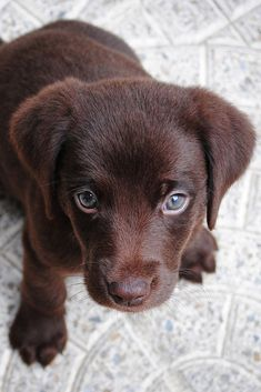 A brown cute puppy #cute #puppy #dog #cuteanimals #TheWorldIsGreat