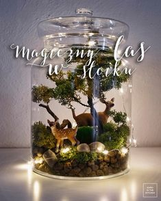 Magiczny las w słoiku Christmas Diy, Xmas, Bottle Garden, Holiday Themes, Bonsai, Indoor Plants, Snow Globes, Origami, Diy And Crafts