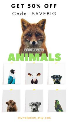 Flash. Sale. Alert.   Get 50% Off of our 'Animals Collection'   Use Coupon Code SAVEBIG at checkout   You will get access to more than 20 ready-to-print-and-frame animal pictures   This offer may not last long. Animal Pictures, Coupon, Coding, Nursery, Frame, Prints, Animals, Collection, Art
