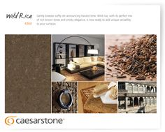 Caesarstone's story of the Wild Rice Quartz Surface. For Kitchen, Bathroom, Flooring, and any other space you design around the house.