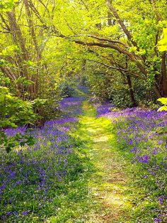 Bluebell path (England) by Pete Biggs Follow yonce & get posts on the daily @hayleybyu