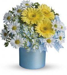 Baby boy Teleflora http://www.teleflora.com/flowers/bouquet/telefloras-once-upon-a-daisy-372696p.asp