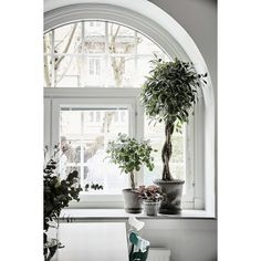 Arched window w/topiaries from http ❤ liked on Polyvore featuring home and home decor