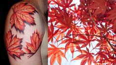 The Maple Leaf – an ancient symbol of love in China and Japan. North American settlers also used to place the maple leaves at the foot of their beds to ward off demons and encourage sexual pleasure as well as peaceful sleep.