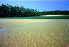 Marajó Island, Pará Brasil ven para cá ven