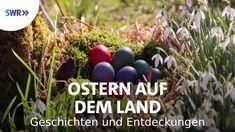 Eggplant, Fruit, Fertility, Country, Easter Activities, History, Eggplants
