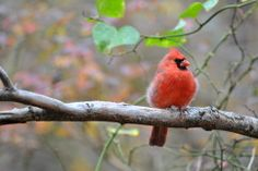 Backyard bird guide