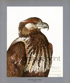 """NOT A COPY This #lithograph was published by The Field Museum of Natural History Chicago in 1930 issued in portfolio with title: """"Abyssinian birds and mamals"""". This first ed... #vintage #ornithology"""