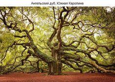 Необычные деревья со всего мира. Обсуждение на LiveInternet - Российский Сервис Онлайн-Дневников