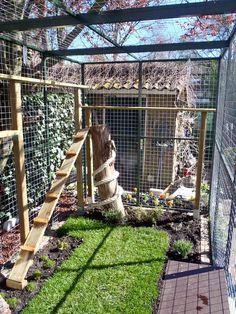 Outside Cat Enclosure, Diy Cat Enclosure, Rabbit Enclosure, Reptile Enclosure, Cage Chat, Cat Fence, Cat Grass, Cat Cages, Cat Towers
