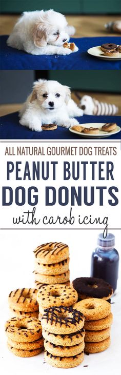 Gourmet Dog Treats - Peanut Butter Dog Donuts with Carob Icing. All natural, no added sugar or salt. Fun to make and a cute gift for dog lovers! Dog Biscuit Recipes, Dog Treat Recipes, Dog Food Recipes, Gourmet Dog Treats, Homemade Dog Treats, Gourmet Recipes, Peanut Butter Dog Treats, Puppy Treats, Dog Cookies