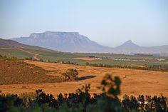 Table Mountain, as seen from the Muratie Wine Estate Table Mountain, Out Of Africa, Afrikaans, Farm Life, South Africa, Wine, Mountains, Travel, Image