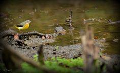 Oiseau. by Fabrice Denise on 500px
