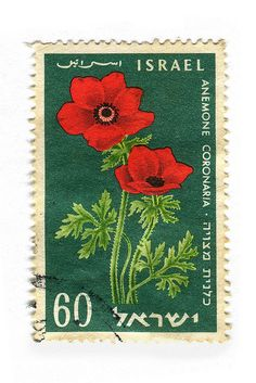 Israel Postage Stamp: Anemone Coronaria by karen horton Old Stamps, Vintage Stamps, Postage Stamp Art, Going Postal, Mail Art, Stamp Collecting, My Stamp, Oeuvre D'art, Poppies