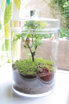 Terrarium with Maple Bonzai
