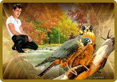 Owl, Bird, Animals, Animales, Animaux, Owls, Birds, Animal, Birdwatching