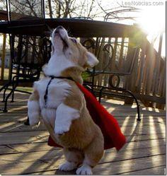 Gracioso perro disfrazado de superhóroe convencido que puede volar - http://www.leanoticias.com/2012/11/26/gracioso-perro-disfrazado-de-superhoroe-convencido-que-puede-volar/