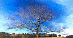 tree composite-1-2-Edit by Photominimalist.deviantart.com on @DeviantArt