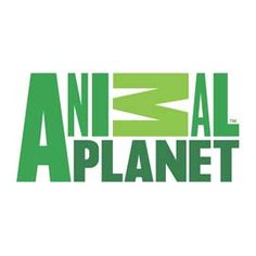 Música do Comercial Animal Planet Desafio Celebridades 2016 | Raul Seixas