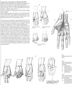 Anatomical drawings of hands from @characterdesigh #anatomy #arm #drawing