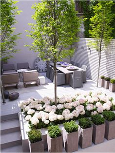 Green for concrete spaces...painted brick wall, series of boxwood planters...hydrangea!