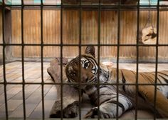 These Heartbreaking Photos Of Zoo Animals Are A Plea For Help And Change1