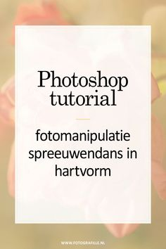 Tutorial - Fotos in animiertes GIF verarbeiten - Fotografille - Today Pin