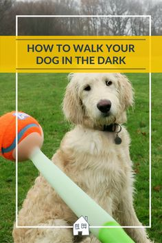 Tips on walking your dog at night. I have put together some tips on how to walk your dog at night. Glow in the dark products, lights and fun!