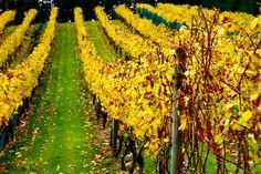 Mudbrick winery. Waiheke, New Zealand. Taken by Kate Purdy