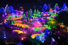 여행정보 > 여행정보 > Nami Island & Morningcalm Garden Tour (Pyeongtaek)
