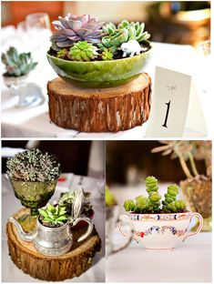 """We just cut down a big tree in the yard and made these """"rustic rounds"""", and I added moss"""