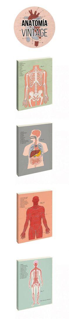Libreta anatomía humana. Ilustraciones médicas básicas de los estratos de cuadro corporal: el sistema muscular, sistema nervioso, esqueleto, y los principales órganos internos. El regalo perfecto para médic@s, enfermer@s y toda ese gente que trabaja duro en el sector sanitario. #vintage, #medicina, #diseñoretro, #notebook, #reaglosoriginales