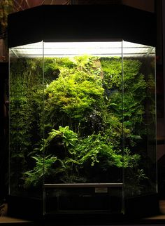 Moss and Carnivourous Plant Vivarium - I love the nice centered layout to match with the angled front. The additional layers near the bottom help add dimension. Not too shabby!