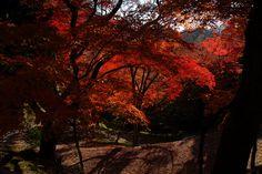 Kyoto Autumn leaves Japan by Mal B, via Flickr