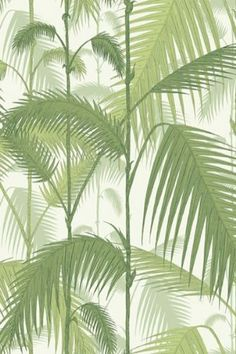 Cole  Son - Contemporary Restyled - Palm Jungle Wallpaper - Green 951001