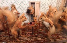 Walter Potter's Museum of Curiosities: bizarre Victorian collection of stuffed animals goes on show again - Telegraph