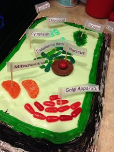 Edible plant cell cake- key lime cake & candy More