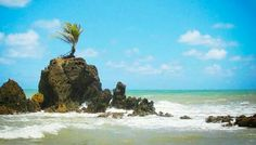 Praia de Tambaba, JP/Paraíba.