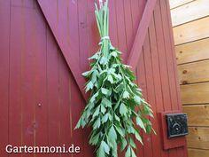 Maggikraut – Liebstöckel ernten und trocknen Harvest, Seasons, Plants, Diy, Bambi, Tricks, Food Porn, Low Carb, Drying Herbs