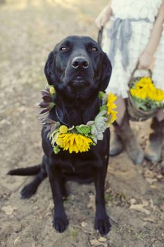 Black lab with a sunflower and succulent collar: http://www.stylemepretty.com/texas-weddings/dallas/2013/10/09/texas-ranch-wedding-from-sarah-kate-photographer-elle-films/ | Photography: Sarah Kate - http://sarahkatephoto.com/