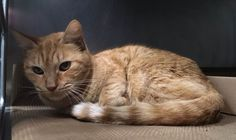 ***UNKNOWN 02/10/17 *** Household Senior Cats Owner Passed Away, Help Them Find New Homes Today @ BACC OWNER DIED - CAME IN WITH A FEW HOUSEMATES