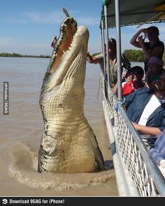 No river tour in Africa, thanks ..