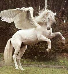 Pegaso: Era un caballo de la mitología griega con alas que podía volar era el caballo de Zeus.