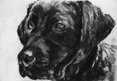 Lab Dog art print  charcoalgiclee print Black by OjsDogPaintings #labradors #labs #dogs #art #charcoaldrawing #drawing #blacklab #lab