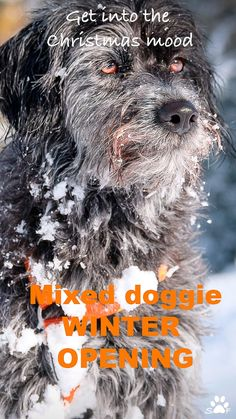 When first snow starts covering our valley in the Tyrolean Alps, we have the tradition of opening the season with a mixed doggie fun shooting. Also this year, so we have put together a Story Pin with a best-of selection. Click the link, come in and enjoy. It is for free! For more snow and winter fun, FOLLOW US, winter has just started. You won't be disappointed.  Yours Wuffclick-pic #dogsonsnow #hundefotografie #schnee #uniqueshots #wuffclickpic