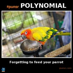punsr POLYNOMIAL meme | Punsr.com | There is a joke in every word