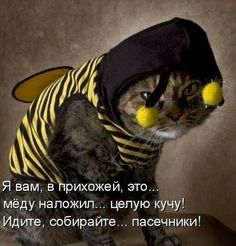 Dogs Funny Jokes New Ideas Funny Cat Jokes, Grumpy Cat Humor, Funny Cats And Dogs, Funny School Memes, Cat Memes, Grumpy Cats, School Quotes, Funny Minion, Kitty Cats